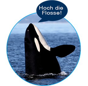 2018-11_orca-karriere_web-entwickler